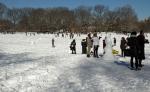 Snowy Sheep Meadow
