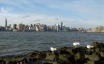 Seaguls Enjoying the View